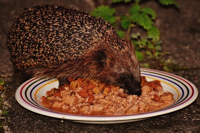 ježek na talíři