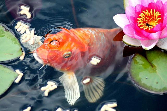 zlatá rybka.jpg