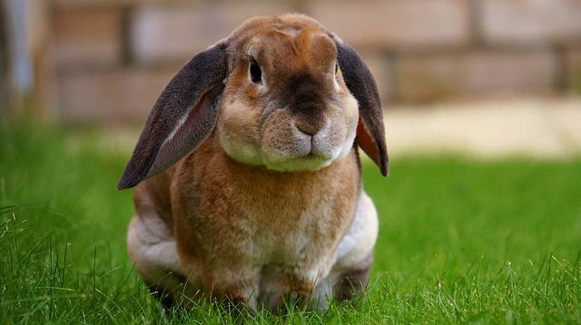 sedící králíček